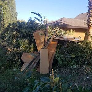 Christmas Tree Removal